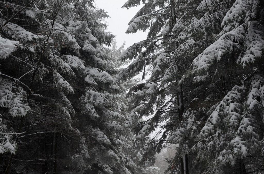 La montée du Donon sous la neige