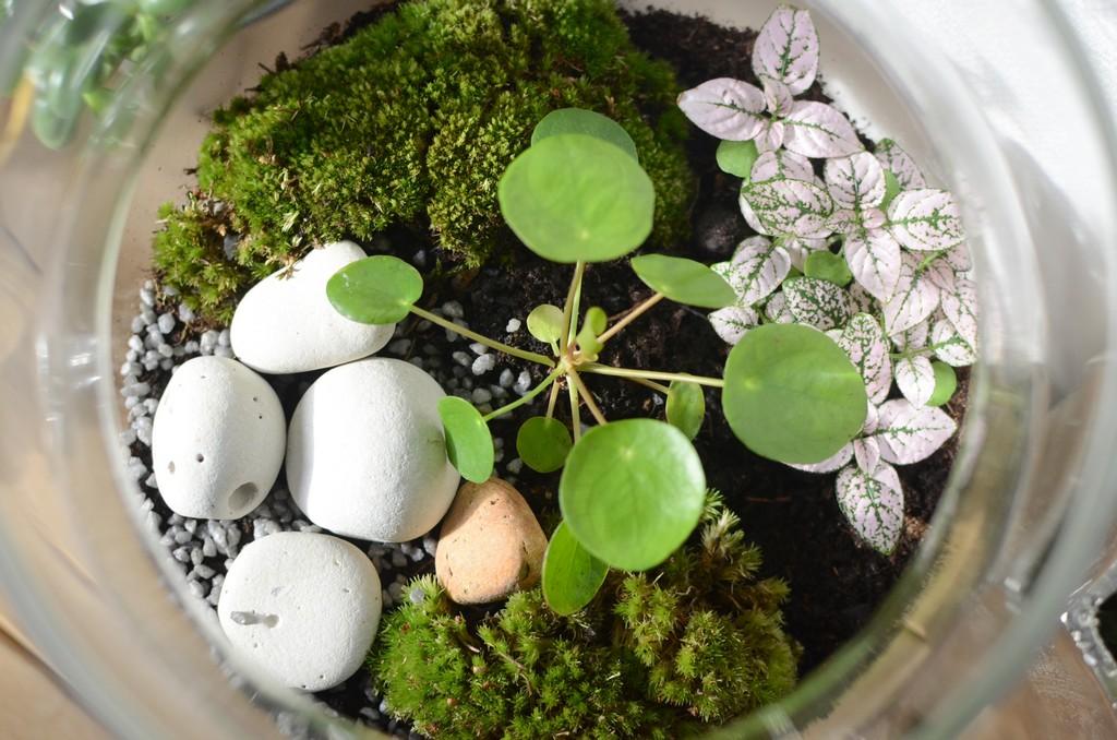 DIY une piléa en terrarium